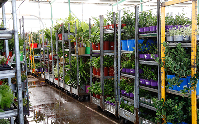 Where we get the BEST plants in WA