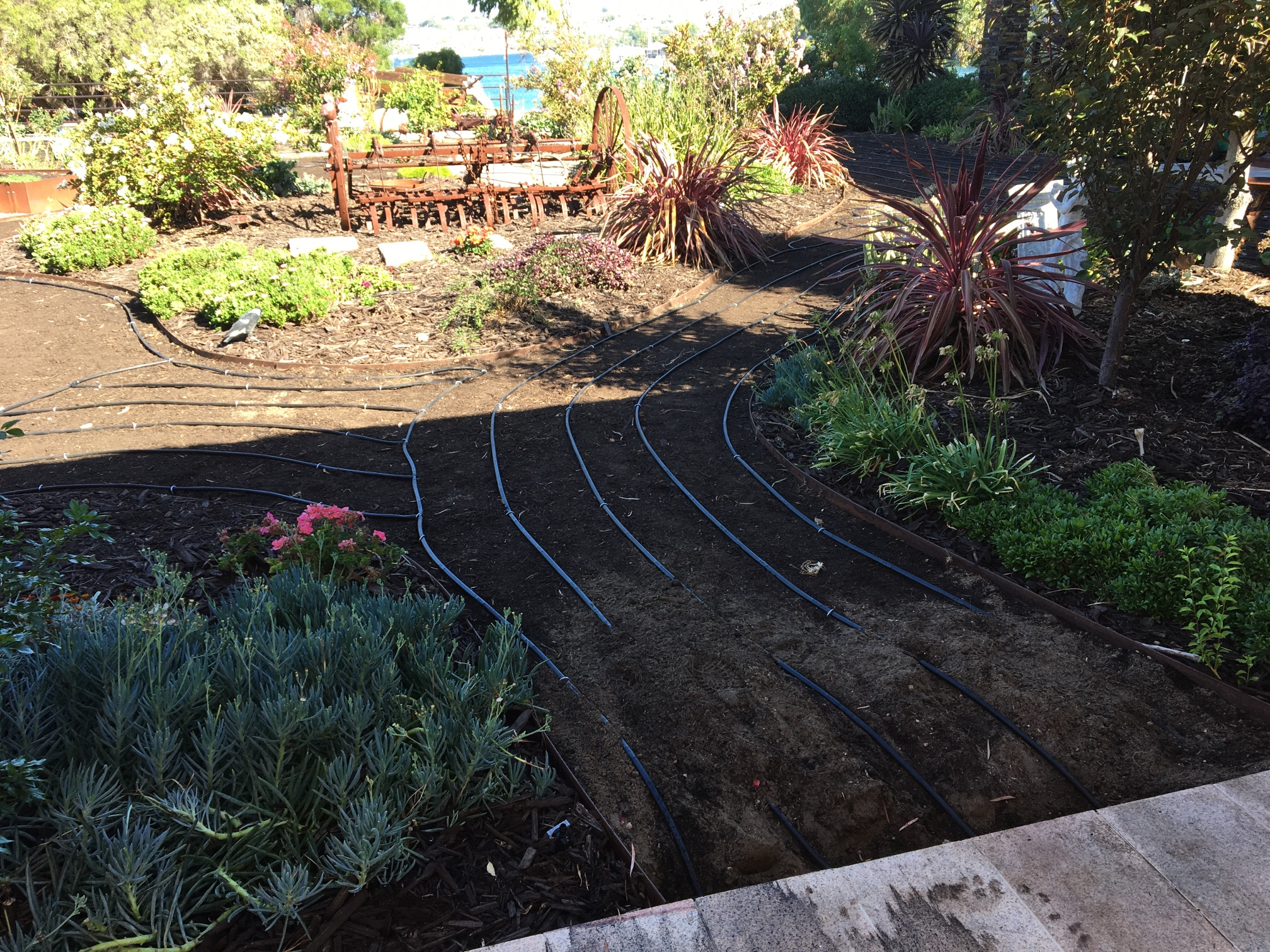 Drip Irrigation in North Fremantle