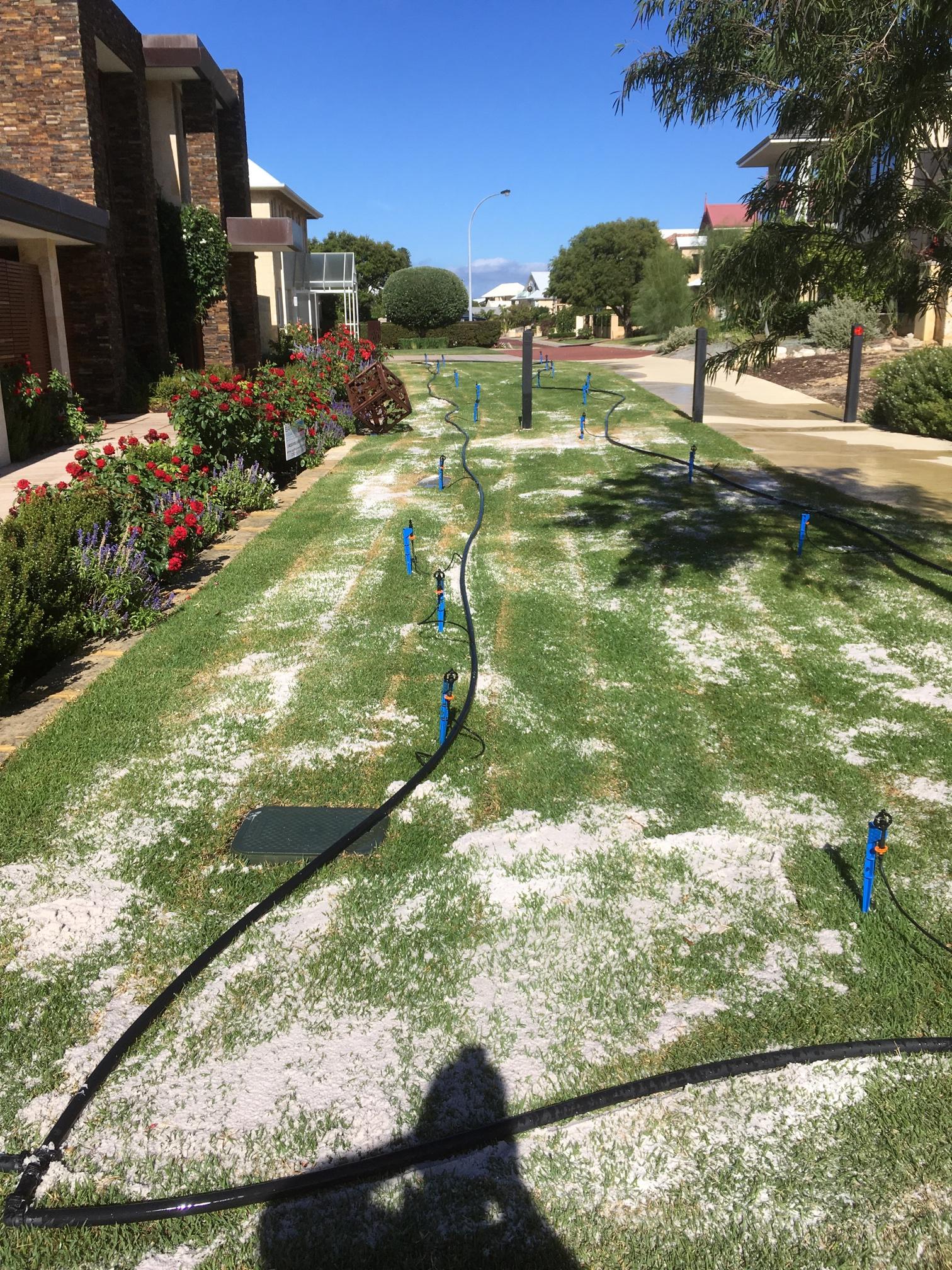 Lawn Revitalisation in North Fremantle