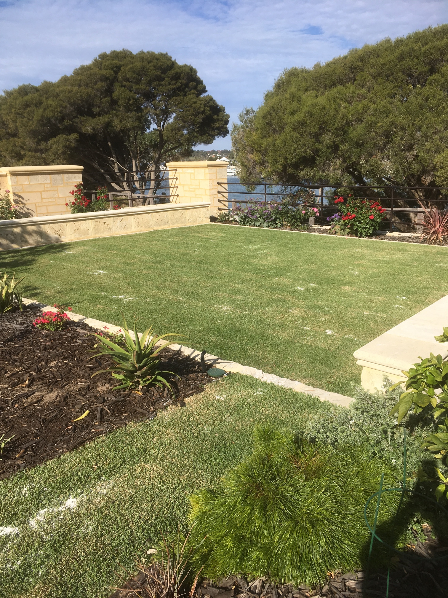 Lawn rehabitalisation in North Fremantle