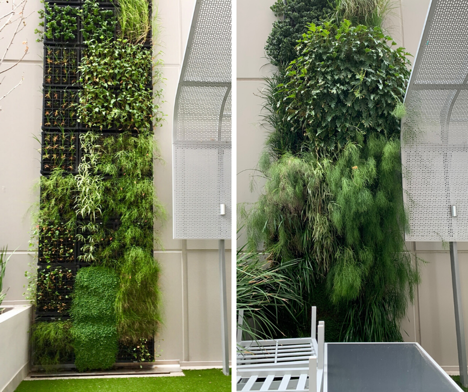Concerto Apartments Vertical Living Walls Before and After