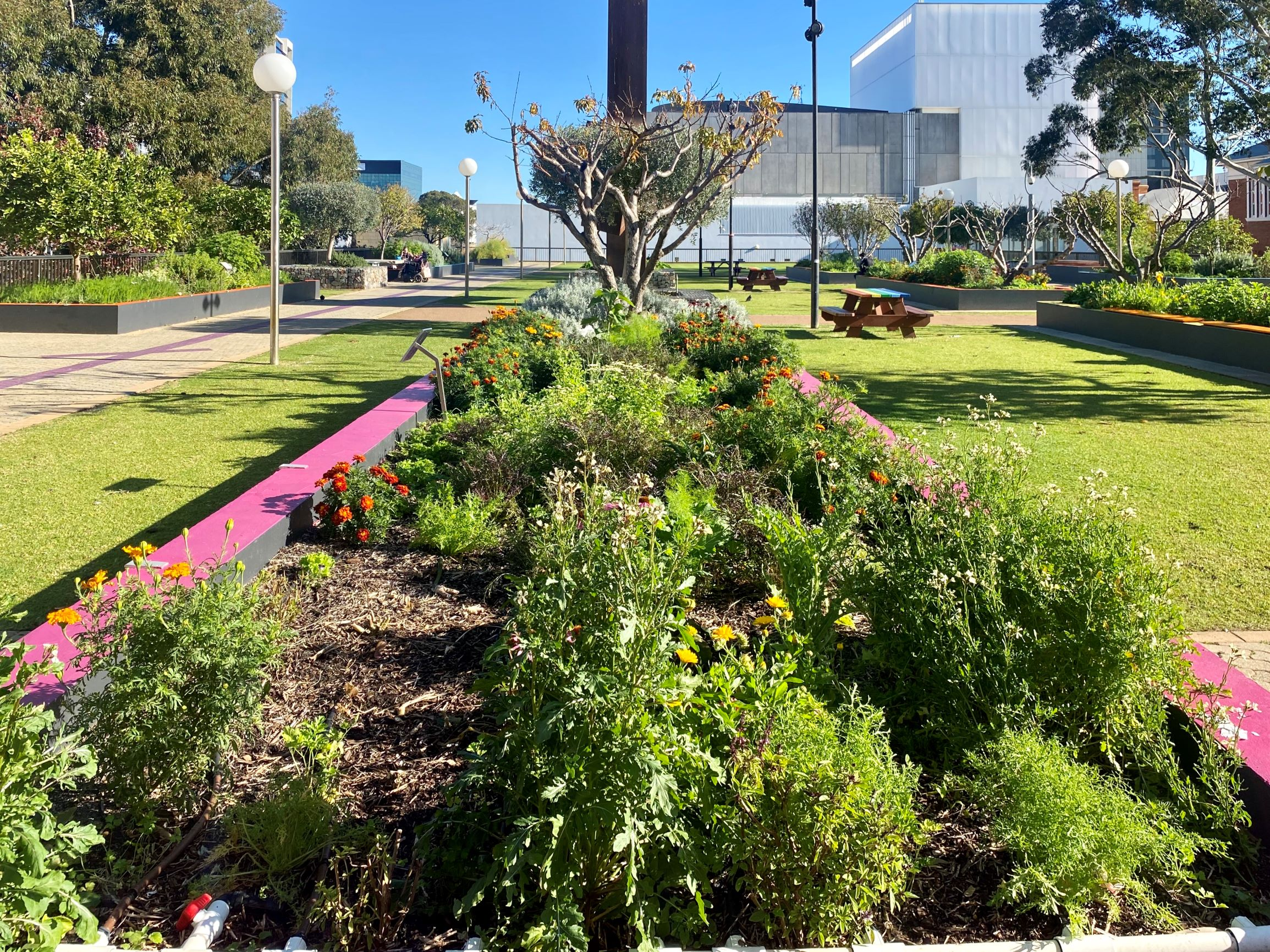Perth Cultural Centre Subsurface Irrigation